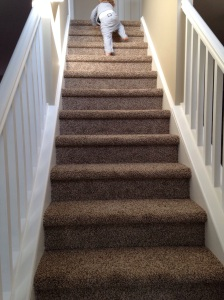 teddy stairs